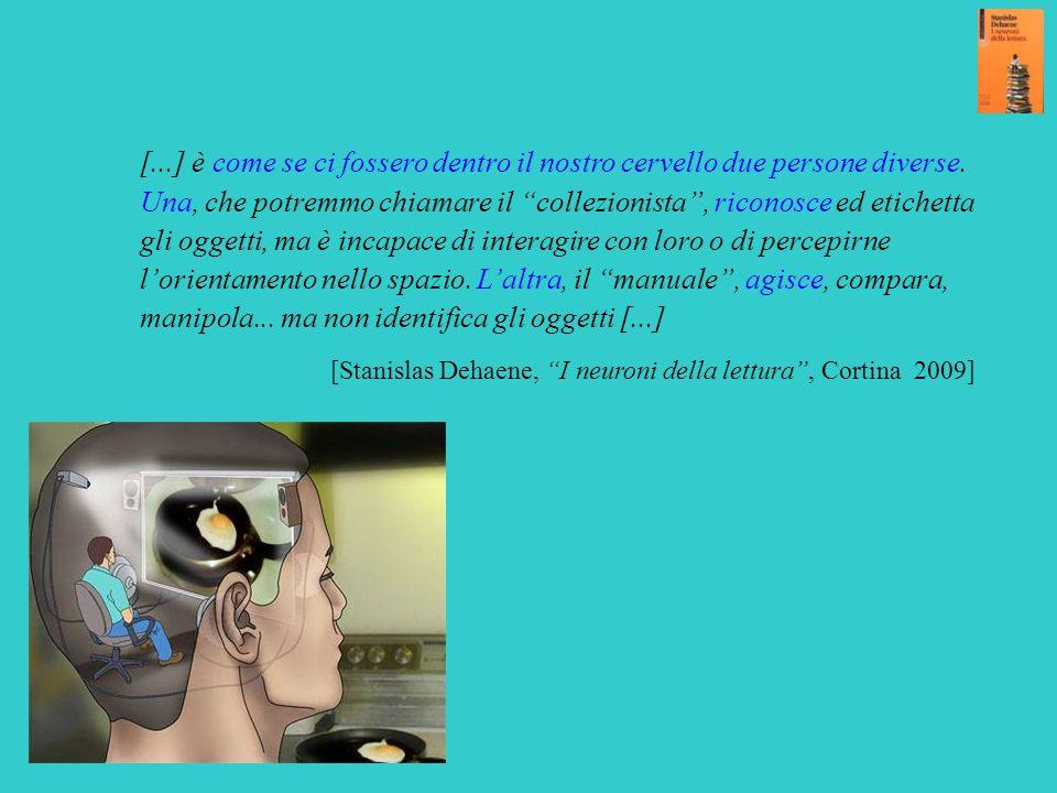 [...] è come se ci fossero dentro il nostro cervello due persone diverse. Una, che potremmo chiamare il collezionista , riconosce ed etichetta gli oggetti, ma è incapace di interagire con loro o di percepirne l'orientamento nello spazio. L'altra, il manuale , agisce, compara, manipola... ma non identifica gli oggetti [...]